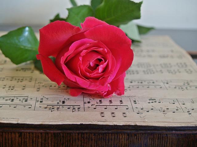 skladba a růže